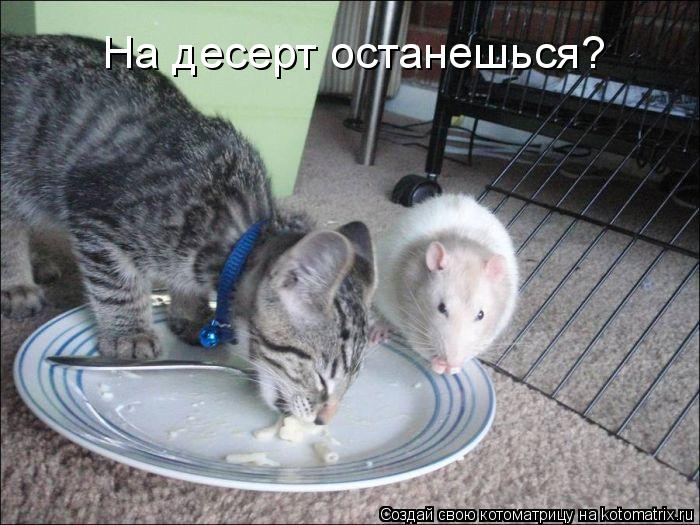 Котоматрица - На десерт останешься?