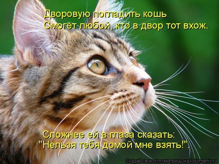 """Котоматрица: Дворовую погладить кошь Смогёт любой, кто в двор тот вхож. Сложнее ей в глаза сказать: """"Нельзя тебя домой мне взять!""""."""