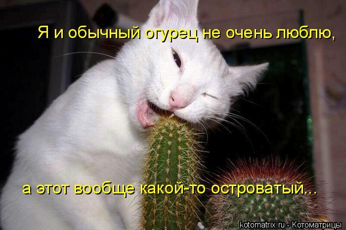 Котоматрица: Я и обычный огурец не очень люблю, а этот вообще какой-то островатый...