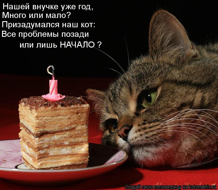 Котоматрица: Нашей внучке уже год, Много или мало? Призадумался наш кот: Все проблемы позади  или лишь НАЧАЛО ?