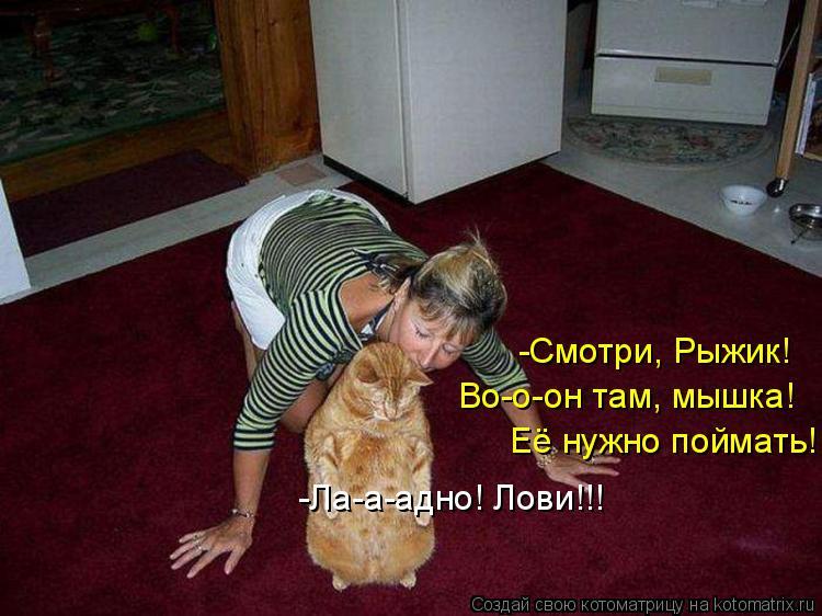 Котоматрица - -Смотри, Рыжик! Во-о-он там, мышка! Её нужно поймать! -Ла-а-адно! Лови