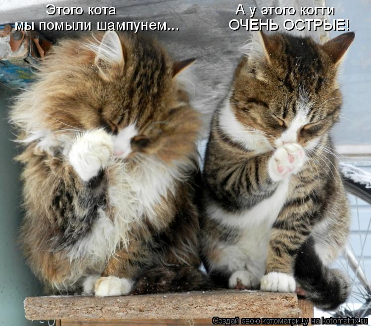 Котоматрица - Этого кота                             А у этого когти мы помыли шампу