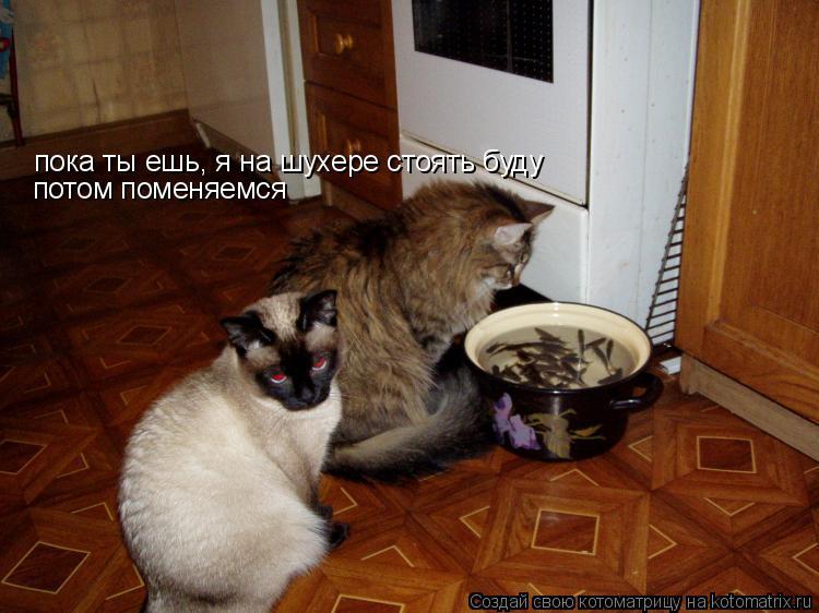 Котоматрица: пока ты ешь, я на шухере стоять буду  потом поменяемся
