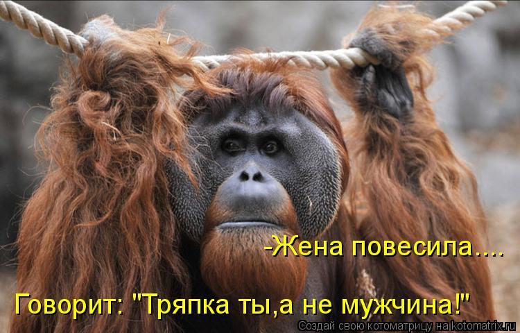 Котоматрица - Говорит: