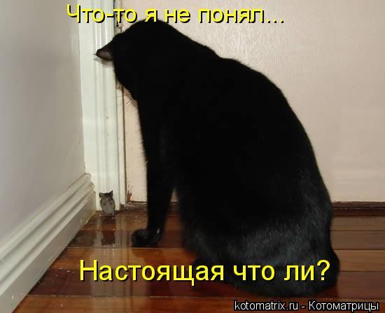 Котоматрица: Что-то я не понял... Настоящая что ли?
