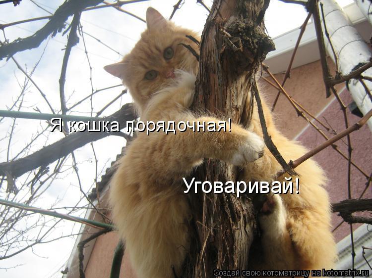 Котоматрица - Я кошка порядочная! Уговаривай!