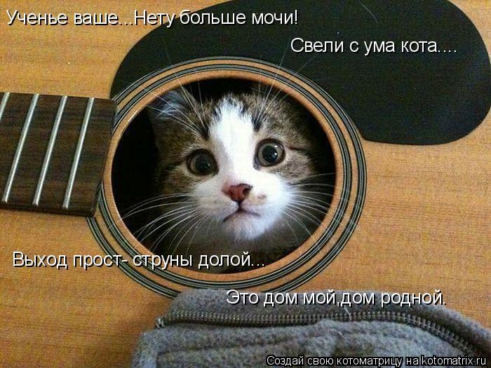 Котоматрица: Ученье ваше...Нету больше мочи! Свели с ума кота.... Выход прост- струны долой... Это дом мой,дом родной.