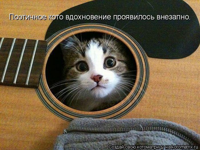 Котоматрица: Поэтичное кото вдохновение проявилось внезапно.