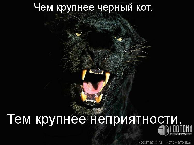 Котоматрица: Чем крупнее черный кот. Тем крупнее неприятности.