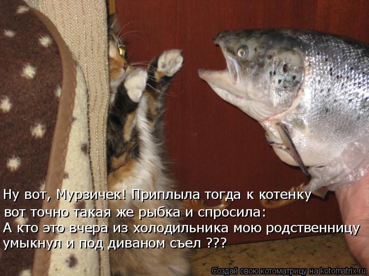 Котоматрица - Ну вот, Мурзичек! Приплыла тогда к котенку вот точно такая же рыбка и