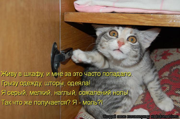 Котоматрица: Живу в шкафу, и мне за это часто попадало. Грызу одежду, шторы, одеяла! Я серый, мелкий, наглый, сожалений ноль!  Так что же получается? Я - моль?!