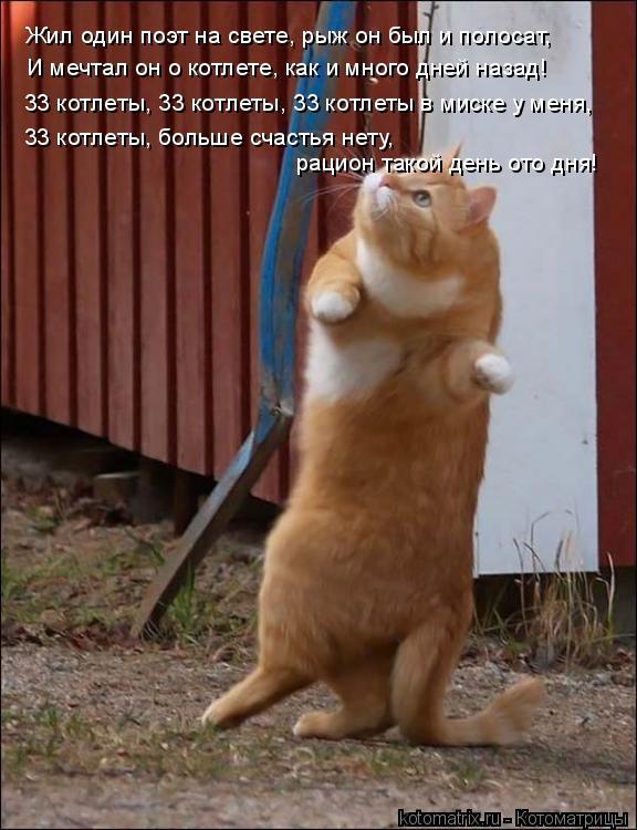 Котоматрица: Жил один поэт на свете, рыж он был и полосат, И мечтал он о котлете, как и много дней назад! 33 котлеты, 33 котлеты, 33 котлеты в миске у меня, 33 кот
