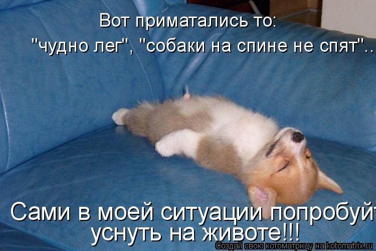 "Котоматрица: Вот приматались то:  ""чудно лег"", ""собаки на спине не спят""... Сами в моей ситуации попробуйте уснуть на животе!!!"
