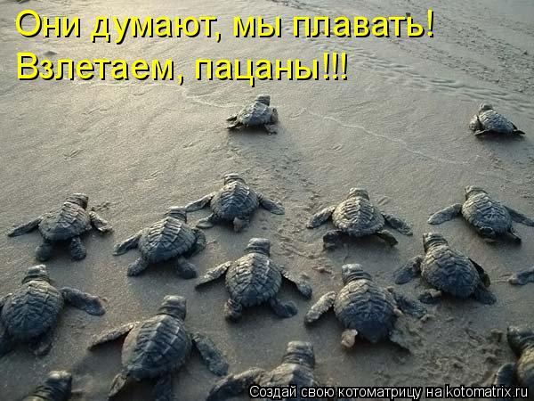 Котоматрица - Они думают, мы плавать! Взлетаем, пацаны!!!