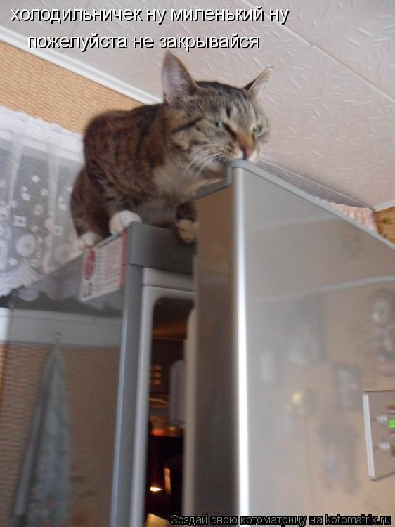Котоматрица: холодильничек ну миленький ну  пожелуйста не закрывайся