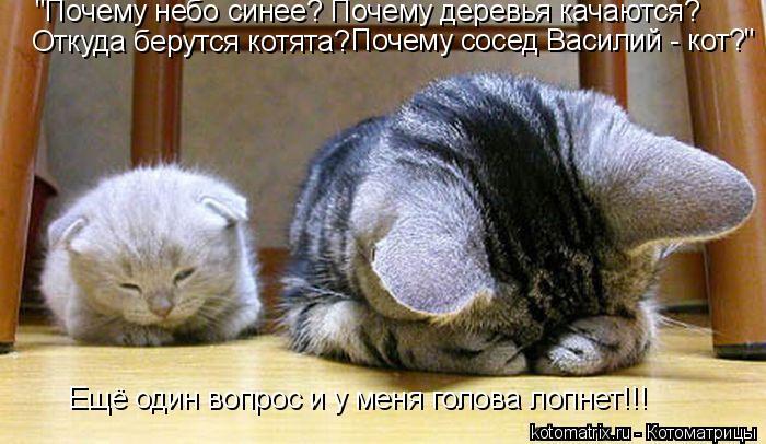 """Котоматрица: """"Почему небо синее? Почему деревья качаются? Откуда берутся котята? Почему сосед Василий - кот? """" Ещё один вопрос и у меня голова лопнет!!!"""