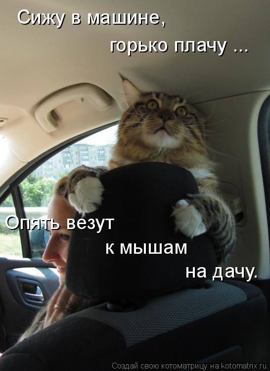Котоматрица: Сижу в машине,  Опять везут на дачу. к мышам  горько плачу ...