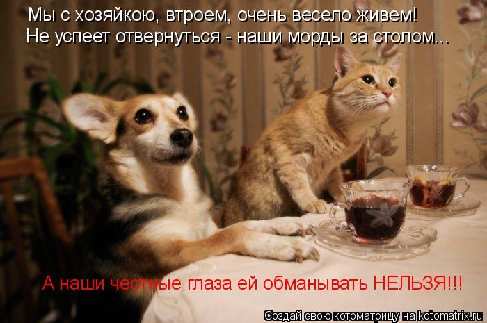 Котоматрица: Мы с хозяйкою, втроем, очень весело живем! Не успеет отвернуться - наши морды за столом... А наши честные глаза ей обманывать НЕЛЬЗЯ!!!