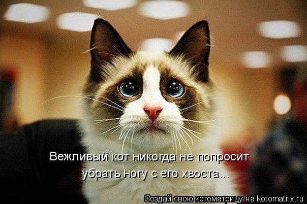 Котоматрица: Вежливый кот никогда не попросит  убрать ногу с его хвоста...
