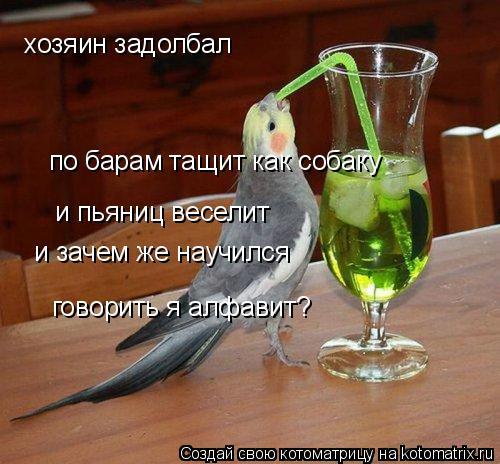 Котоматрица: хозяин задолбал по барам тащит как собаку и пьяниц веселит и зачем же научился говорить я алфавит?