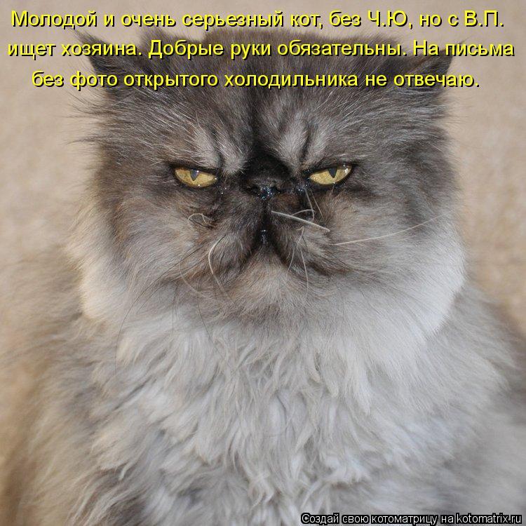 Котоматрица: Молодой и очень серьезный кот, без Ч.Ю, но с В.П. ищет хозяина. Добрые руки обязательны. На письма  без фото открытого холодильника не отвечаю.