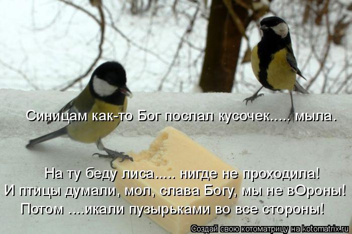 Котоматрица: Синицам как-то Бог послал кусочек..... мыла. На ту беду лиса..... нигде не проходила! И птицы думали, мол, слава Богу, мы не вОроны! Потом ....икали п