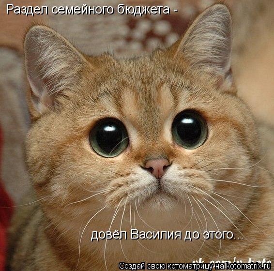 Котоматрица: Раздел семейного бюджета - довёл Василия до этого...
