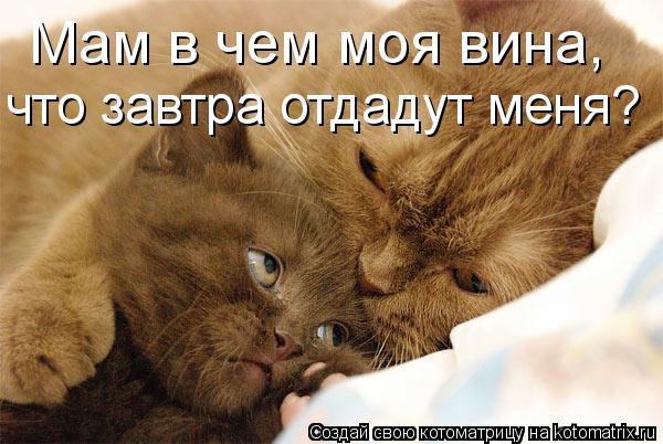 Котоматрица: Мам в чем моя вина, что завтра отдадут меня?