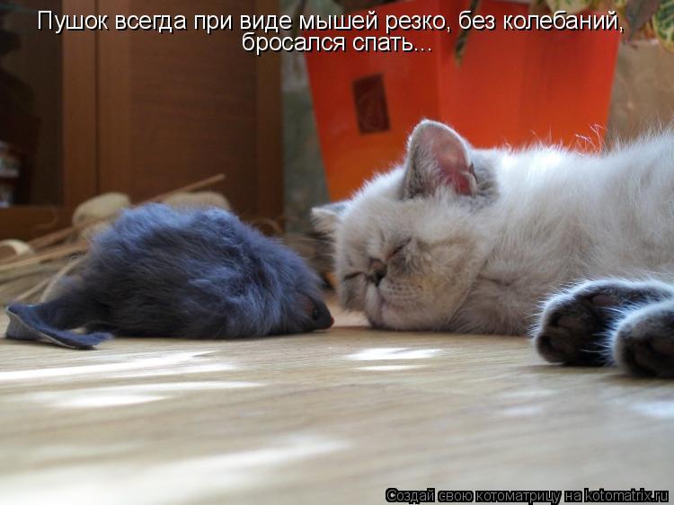 Котоматрица - Пушок всегда при виде мышей резко, без колебаний,  бросался спать...