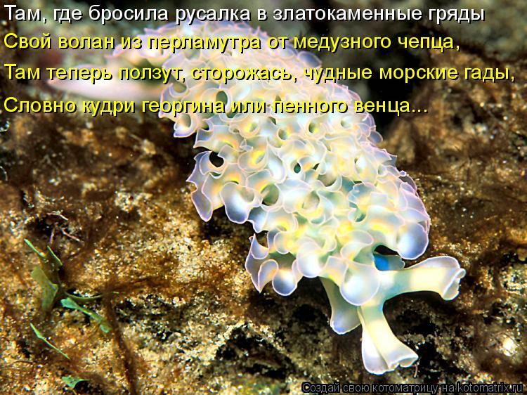 Котоматрица: Там, где бросила русалка в златокаменные гряды Свой волан из перламутра от медузного чепца, Там теперь ползут, сторожась, чудные морские га