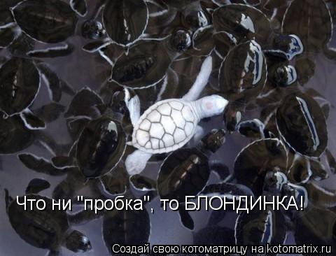 """Котоматрица: Что ни """"пробка"""", то БЛОНДИНКА!"""