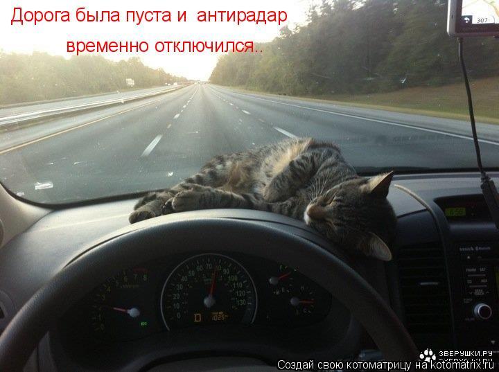 Котоматрица: Дорога была пуста и  антирадар  временно отключился..
