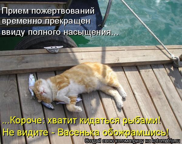 Котоматрица - Прием пожертвований временно прекращен ввиду полного насыщения... ...К