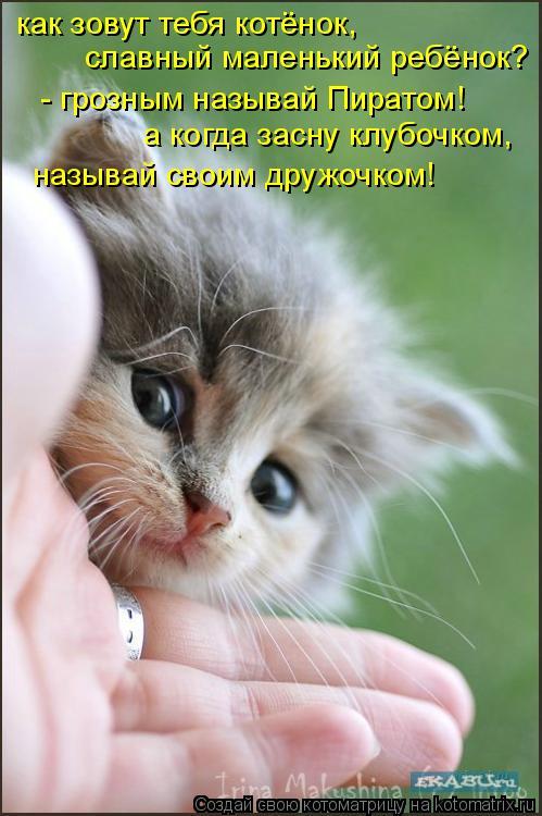 Котоматрица: как зовут тебя котёнок, славный маленький ребёнок? - грозным называй Пиратом! а когда засну клубочком, называй своим дружочком!