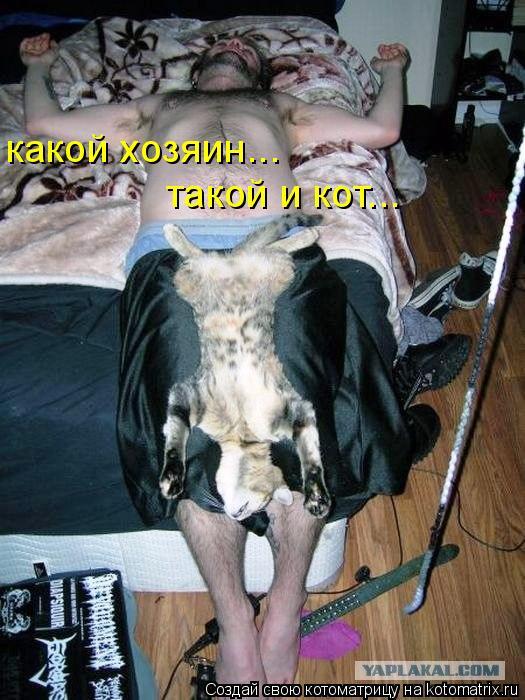 Котоматрица: какой хозяин... такой и кот...