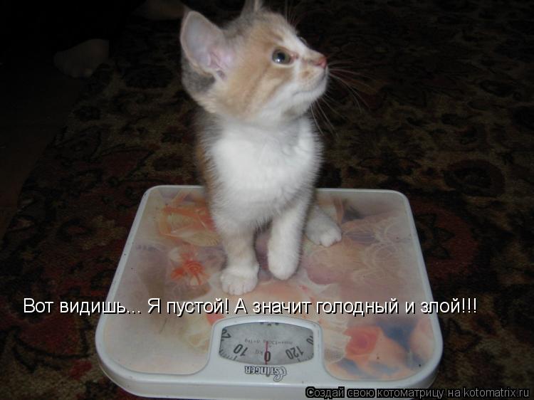 Котоматрица - Вот видишь... Я пустой! А значит голодный и злой!!!