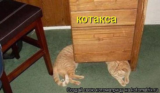 Котоматрица: котакса