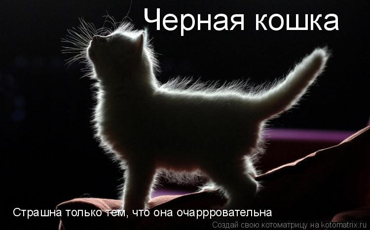Котоматрица: Черная кошка   Страшна только тем, что она очаррровательна