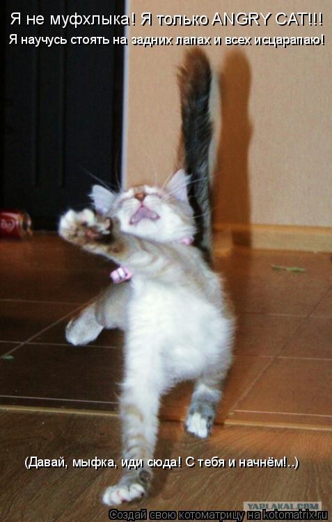 Котоматрица: Я не муфхлыка! Я только ANGRY CAT!!! Я научусь стоять на задних лапах и всех исцарапаю! (Давай, мыфка, иди сюда! С тебя и начнём!..)
