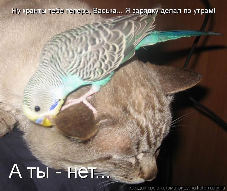 Котоматрица: Ну кранты тебе теперь, Васька... Я зарядку делал по утрам! А ты - нет...