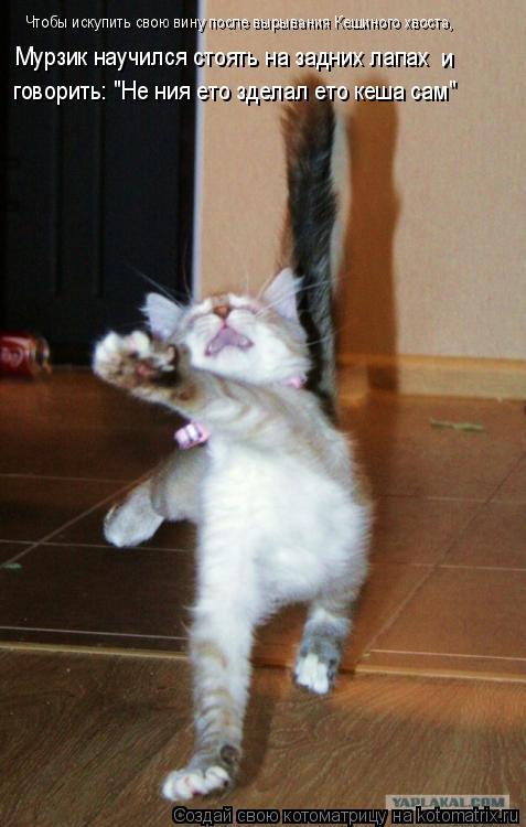 """Котоматрица: Чтобы искупить свою вину после вырывания Кешиного хвоста, Мурзик научился стоять на задних лапах  и говорить: """"Не ния ето зделал ето кеша са"""