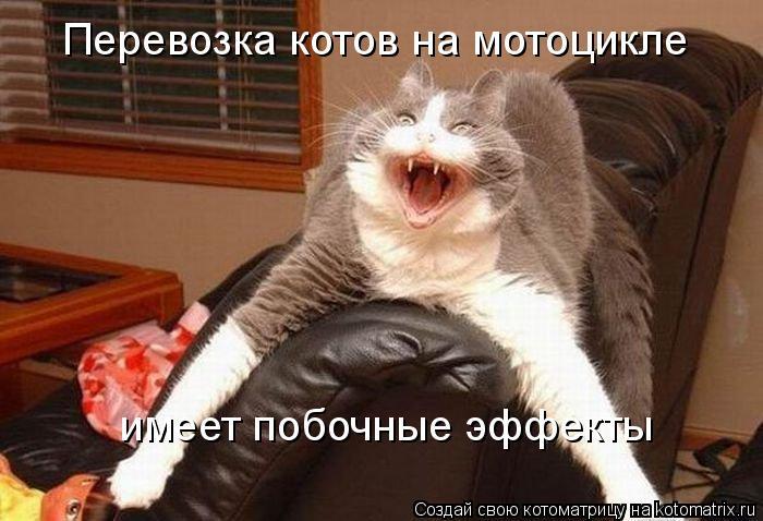 Котоматрица - Перевозка котов на мотоцикле имеет побочные эффекты