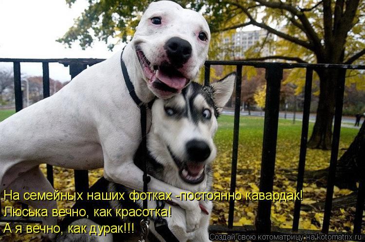 Котоматрица: На семейных наших фотках -постоянно кавардак! Люська вечно, как красотка! А я вечно, как дурак!!!