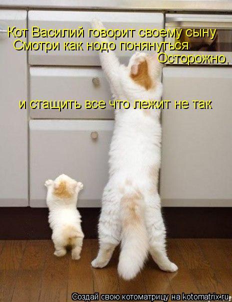 Котоматрица: Кот Василий говорит своему сыну Смотри как нодо понянуться Осторожно,  и стащить все что лежит не так