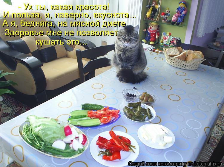 Котоматрица - А я, бедняга, на мясной диете  И польза, и, наверно, вкуснота... кушат