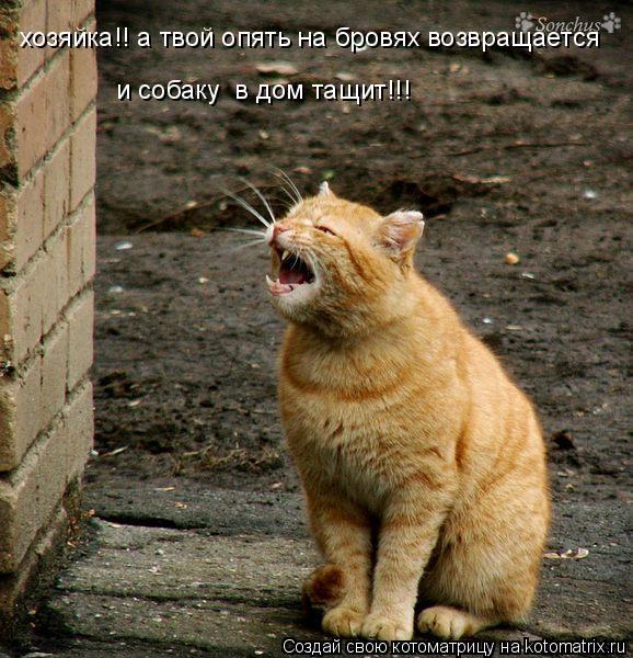 Котоматрица: хозяйка!! а твой опять на бровях возвращается и собаку  в дом тащит!!!