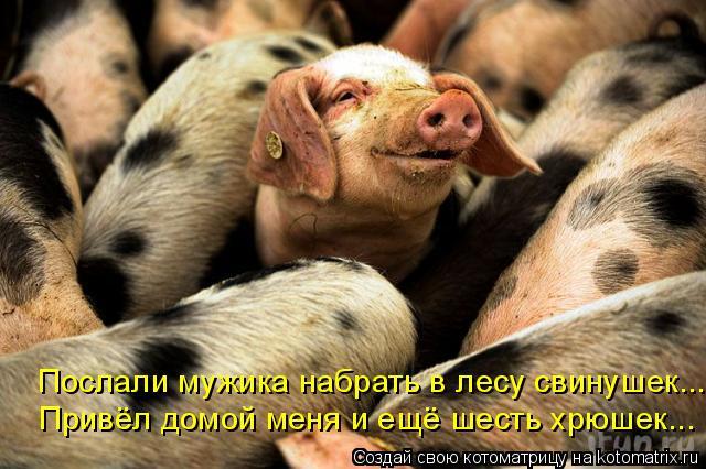 Котоматрица: Послали мужика набрать в лесу свинушек... Привёл домой меня и ещё шесть хрюшек...