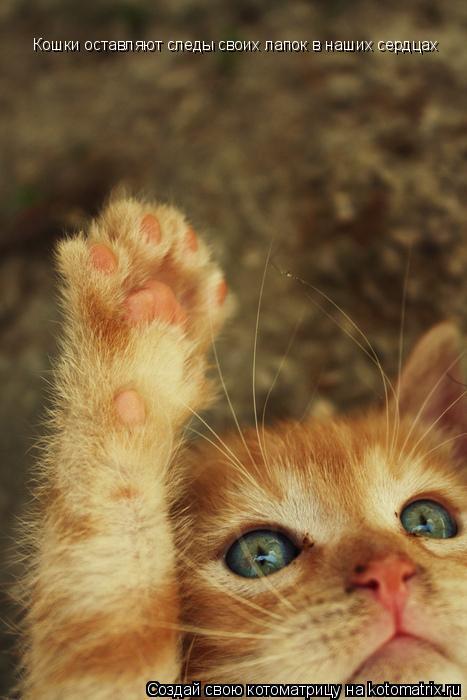 почему кот лапой трогает мои глаза Куце?нко (настоящее