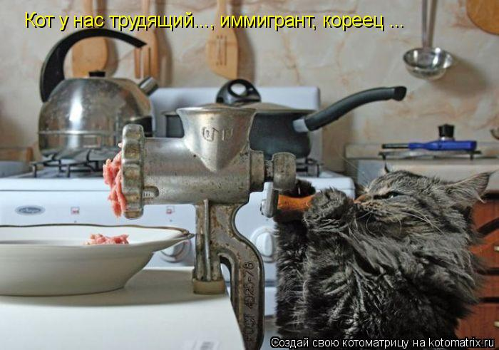 Котоматрица: Кот у нас трудящий..., иммигрант, кореец ...