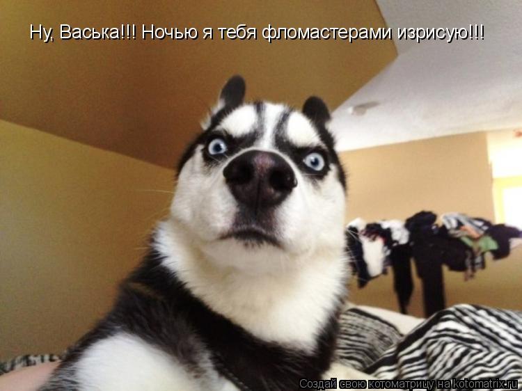 Котоматрица: Ну, Васька!!! Ночью я тебя фломастерами изрисую!!!